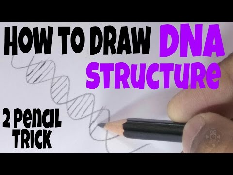 How to Draw a DNA Structure Correctly [ 2 PENCIL TRICK ]