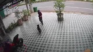 Hilarious moment man does Kung Fu stances to scare away ferocious guard dogs