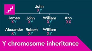 How is the Y chromosome passed down by males through the generations?