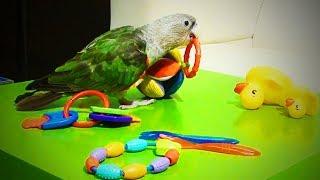 Cute Parrots 🐦 😂 Funny and Cute Parrots (Full) [Funny Pets]