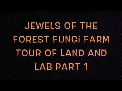 Jewels of the Forest Fungi Farm Tour Pt. 1 Where to Build Mushroom Houses