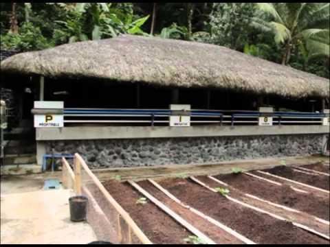 Babuyang Walang Amoy/Natural Hog Raising: Profitable Innovative Growing System in Bicol Part 1