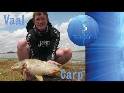 Vaal Dam Carp Fishing | Fish The Sea | Bank Angling