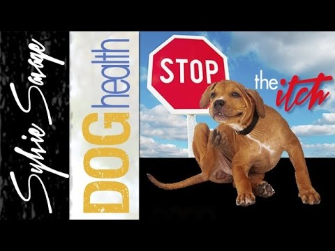Dry Skin on dogs -  How to stop the itch