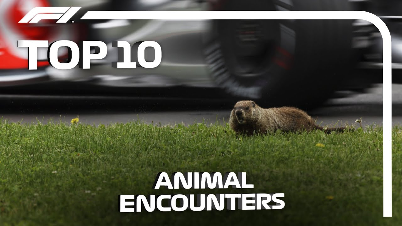 Top 10 Animal Encounters in F1