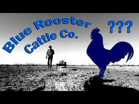 Whats with THE BLUE ROOSTER CATTLE CO. and WHERE DID THE NAME COME FROM???
