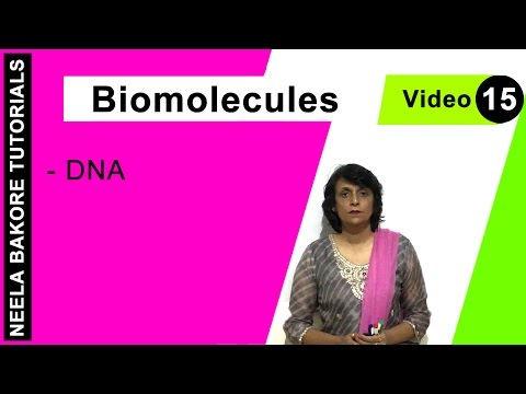 Biomolecules - DNA