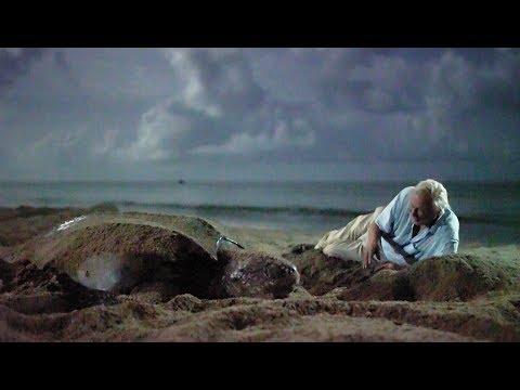 Saving Leatherback Turtles In Trinidad | Blue Planet II