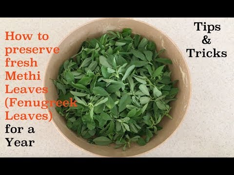 How to preserve fresh Methi Leaves (Fenugreek Leaves) for a year.Tips & Tricks.
