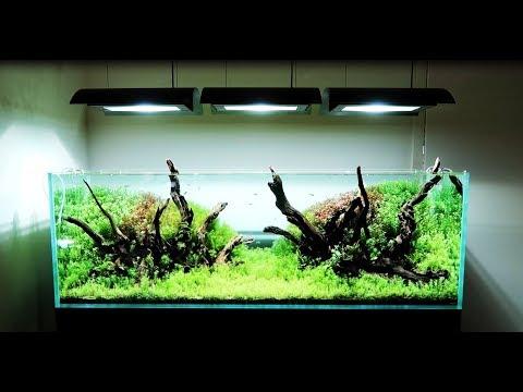 AMAZING Aquaria- ADA Aqaurium Shop Near Seattle Washingtono