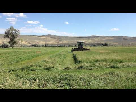 Cutting, Swathing Grass Hay Field for Cow Hay