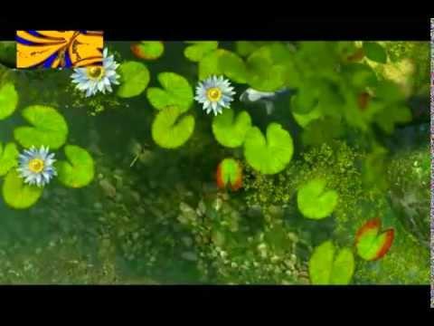 Koi Fish Music Video - NICKBOY