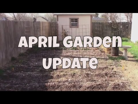 April Garden Update and Tour - And Some of my Plans.