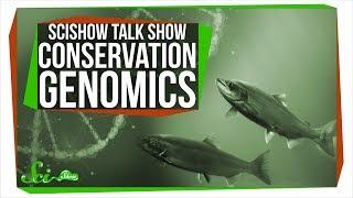 Conservation Genomics and Kizmit the Porcupine: SciShow Talk Show