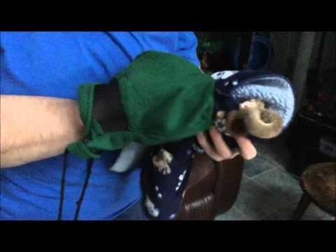 Get Sugar Glider in bonding pouch