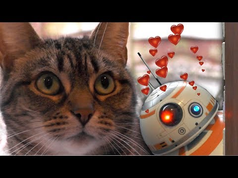 BB-8 Vs. Cats  - Robot Falls in Love with Girl (Star Wars / Disney / Spin Master)