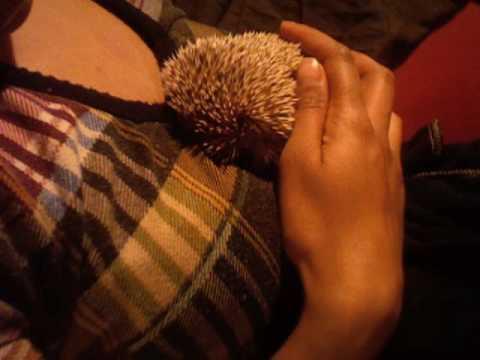 Hedgehog Correction!