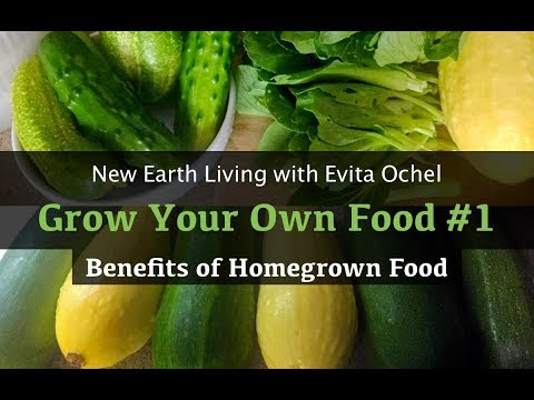 Grow Your Own Food 1 — Benefits of Homegrown Food Journey (NEL ep. 11)