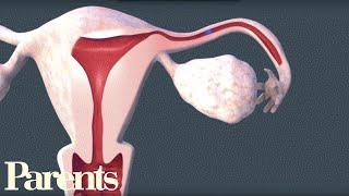How Sperm Meets Egg | Parents
