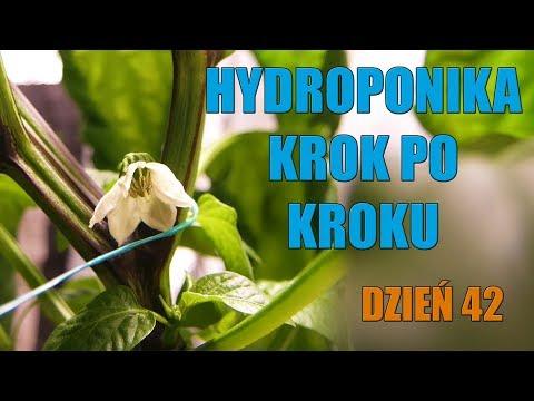 Hydroponika krok po kroku #5 DZIEŃ 42 KWIATY