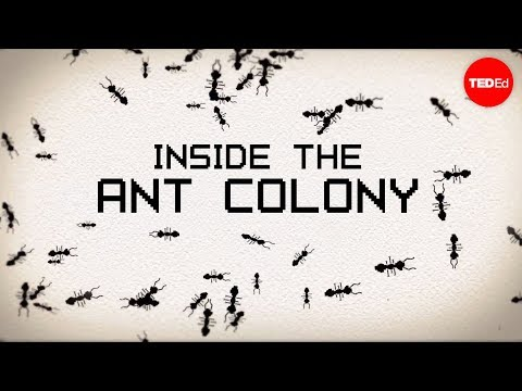 Inside the ant colony - Deborah M. Gordon