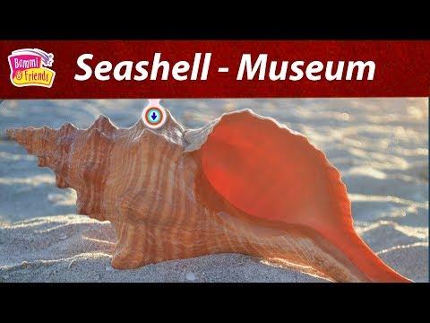 Learn Interesting Facts about Seashell Museum|சீஷெல் அருங்காட்சியகம் |Energetic Yip,