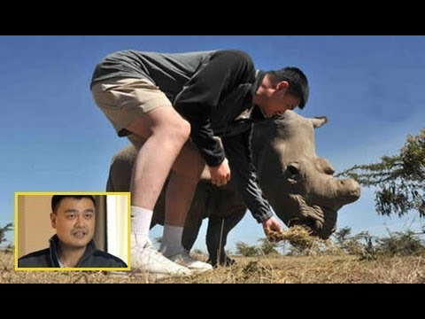 Interview: Yao Ming's public awareness campaign to stop African elephant poaching