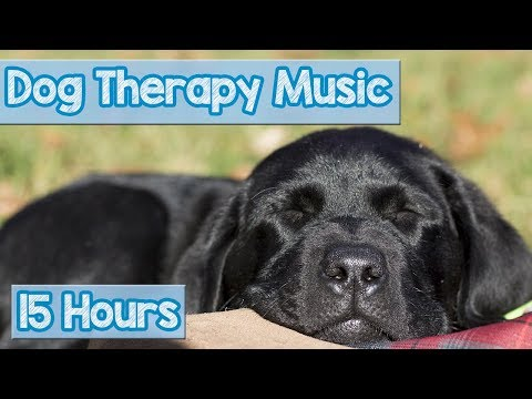 PET MUSIC THERAPY for Dogs, Natural Remedy to Anxiety and Loneliness. De-Stress and Relax Dogs!