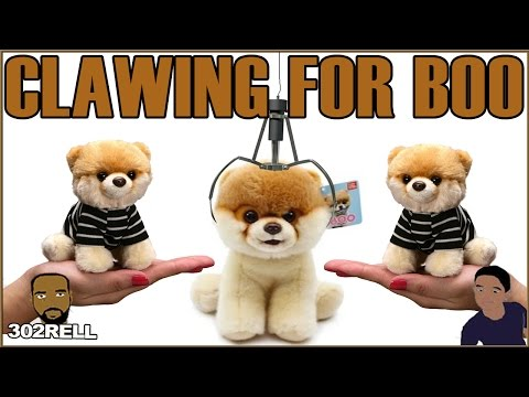 Clawing For the Worlds Cutest Puppy - Boo The Dog & More Plush