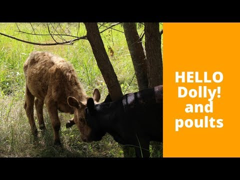 HELLO Dolly! and Poults plus Blueberries, Peaches, Green Beans and Potatoes