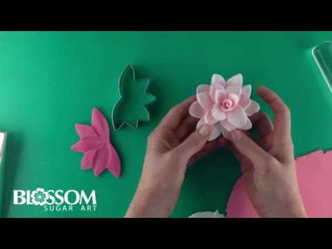 Quick and Easy Edible Waterlily