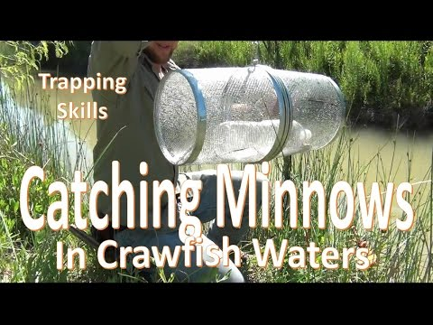 How to Catch Trap Minnows around Crawfish