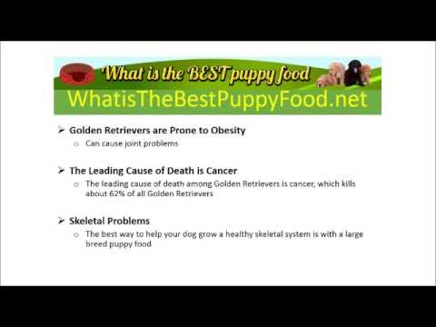 What is the Best Puppy Food for Golden Retrievers