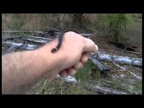 Small snakes found near Venice, FL