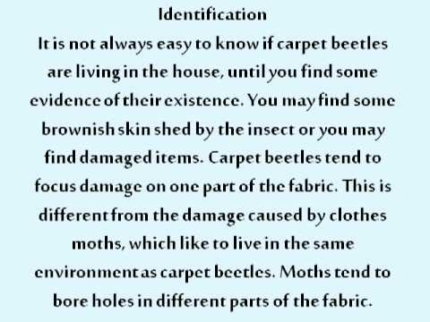 Removing Carpet Beetles from the Home