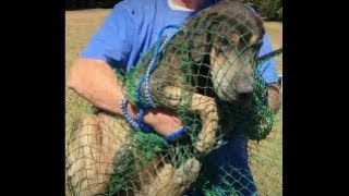 Starving Lake Hound Caught In Net