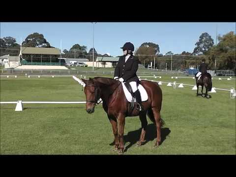 Cashy Preparatory A Dressage Test at 1st Comp.
