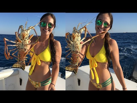Giant Florida Lobster- Catch, Clean, and Cook!