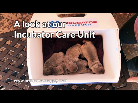 A look at our Incubator Care Unit