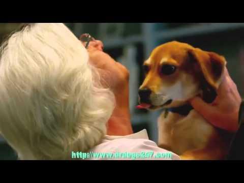 Dog Ear Drops   BEWARE Ear Drops For Dogs Ear Infection
