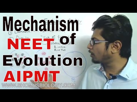 Mechanism of evolution class 12 | Zoology lecture for NEET