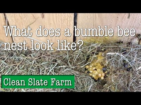 What does a bumble bee nest look like?