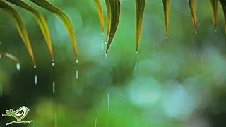 Relaxing Piano Music & Rain Sounds 24/7 • Sleep, Relax, Study, Read, Focus, Yoga