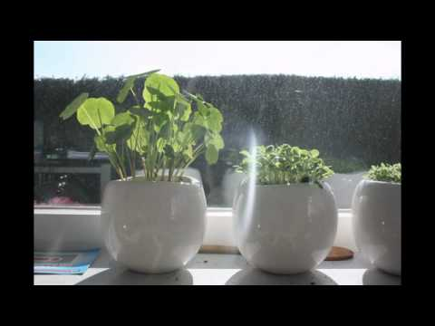 A plant's search for sunlight