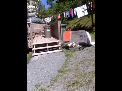 Drop trap to catch feral cat