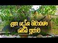 Download ආශිර්වාද බෝධි පූජාව - Buddhist Chantings By Ethabediwewa Hamuduruwo | Bodhi Pooja | Dahami Desawana MP3,3GP,MP4