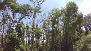 Thousands of Bats in Australian Forrest