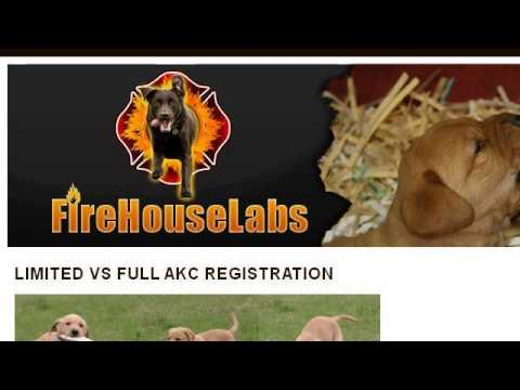 What Is Limited AKC Registration?