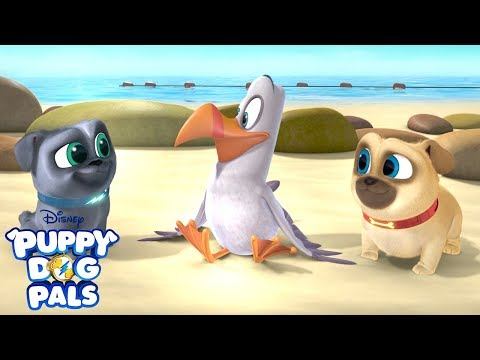 Mission: Find Bob's Flighty Friend!   Puppy Dog Pals   Disney Junior