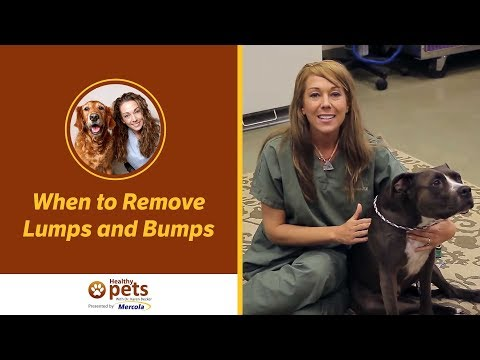 Dr. Becker: When to Remove Lumps and Bumps
